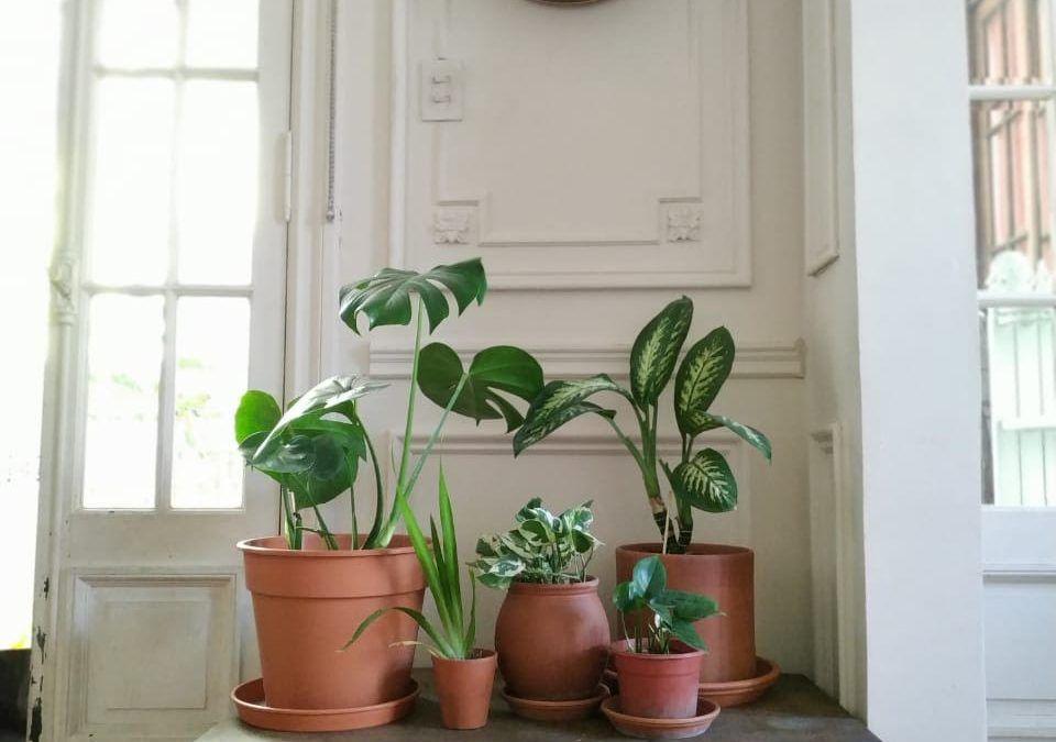 Plantas para interior: Decoración y cuidados